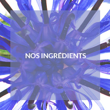 nos ingredients